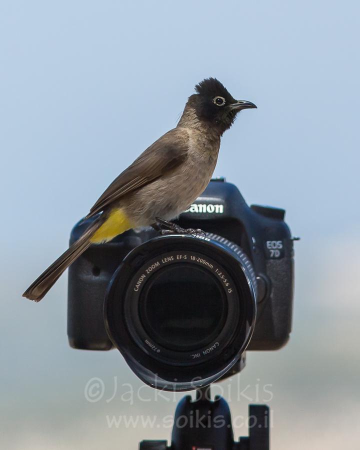 בולבול על עדשת המצלמה