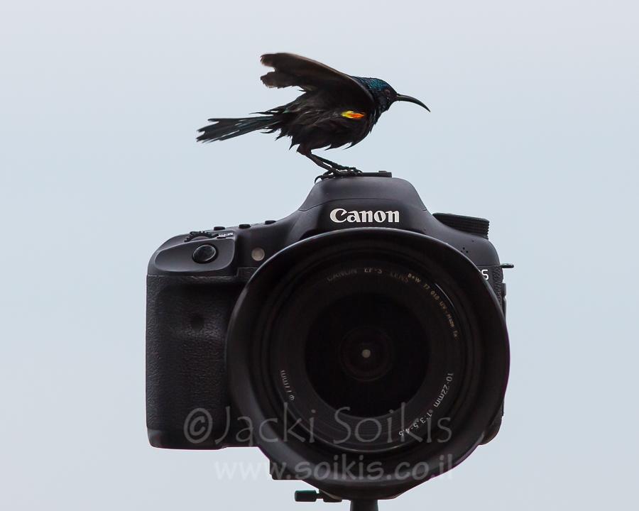 צופית בוהקת על מצלמת Canon 7D
