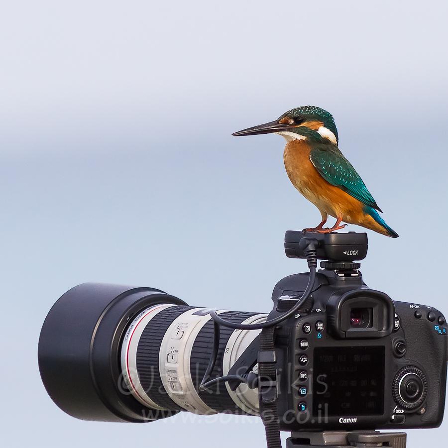 שלדג עומד על מצלמת canon 7D