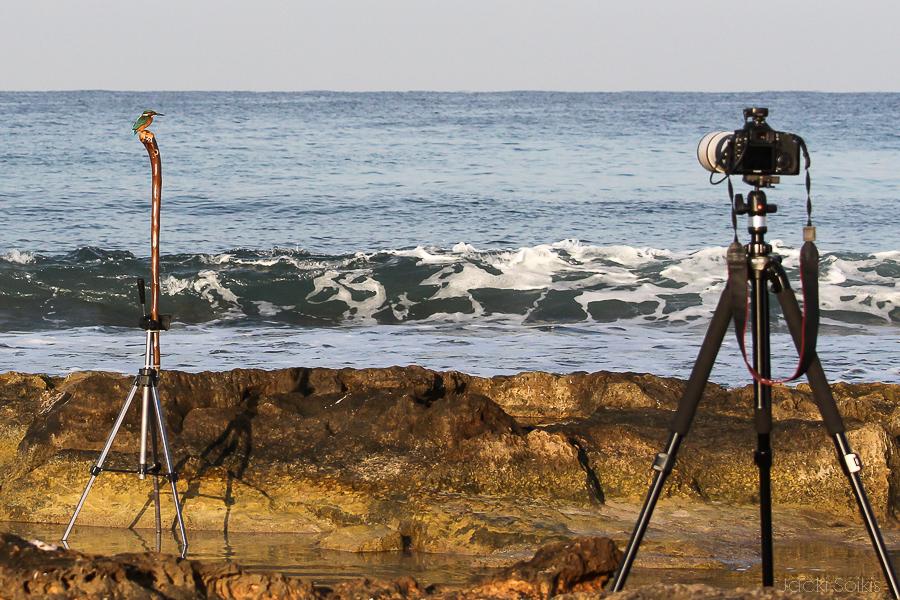 מיקום המצלמה כ 8 מטר מהשלדג הגמדי