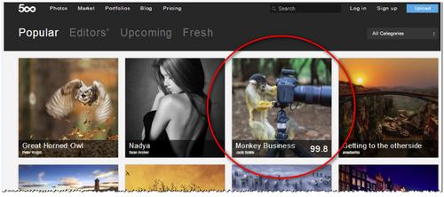 התמונה Monkey Business בראש 500px עם ציון 99.8