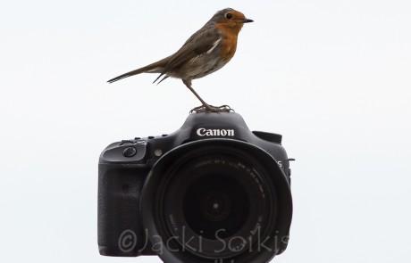 ציפורים על מצלמה