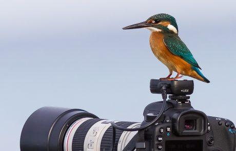 שלדג על מצלמה – מזל!!!